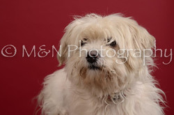 M&N Photography -DSC_3522