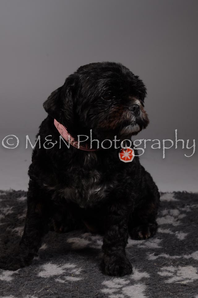 M&N Photography -DSC_2328