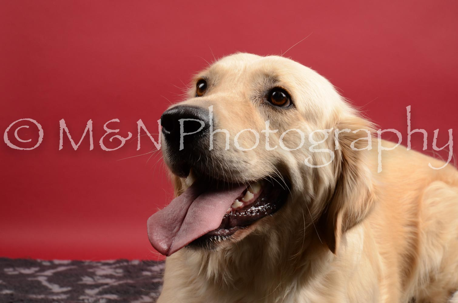M&N Photography -DSC_8543