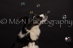 M&N Photography -DSC_9941