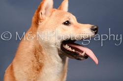 M&N Photography -DSC_4326