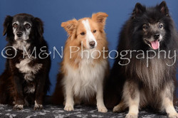 M&N Photography -DSC_4905