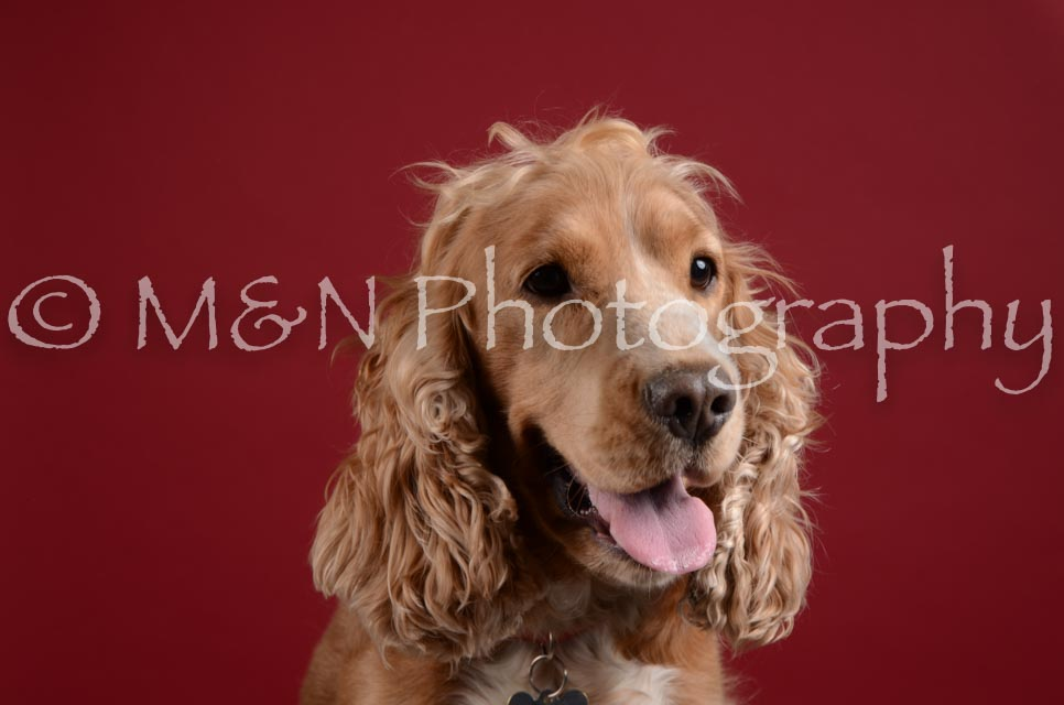 M&N Photography -DSC_3224