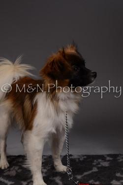 M&N Photography -DSC_2301