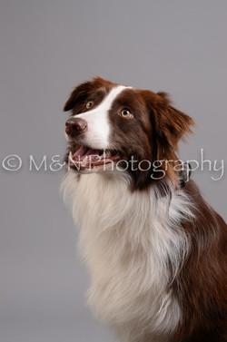 M&N Photography -DSC_2735