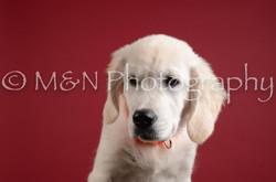 M&N Photography -DSC_3076