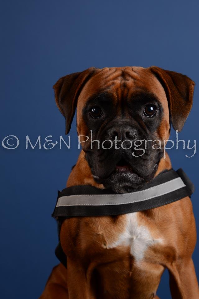 M&N Photography -DSC_5245