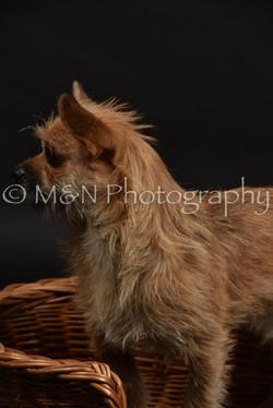 M&N Photography -DSC_2537