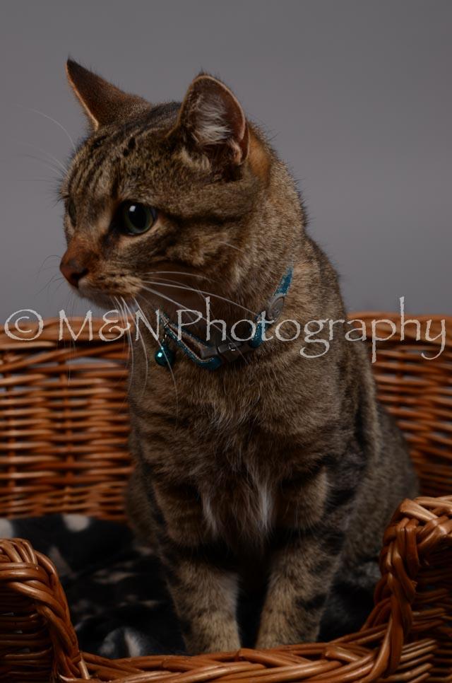 M&N Photography -DSC_2943