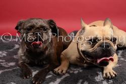 M&N Photography -DSC_8502
