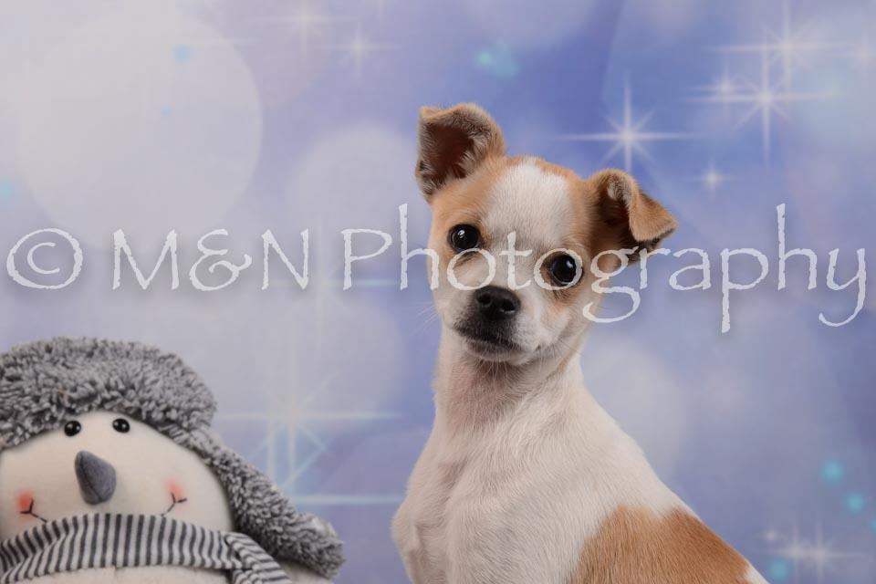 M&N Photography -DSC_6505