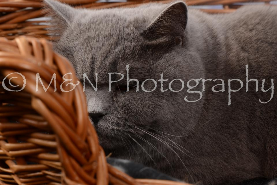 M&N Photography -DSC_6846