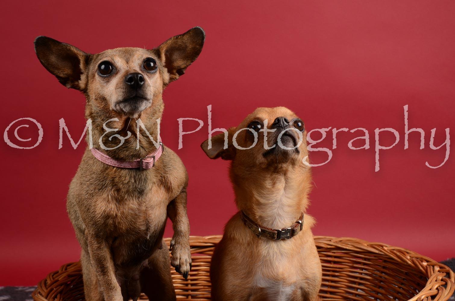 M&N Photography -DSC_8654