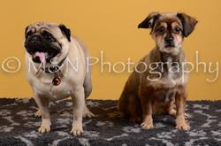 M&N Photography -DSC_4673