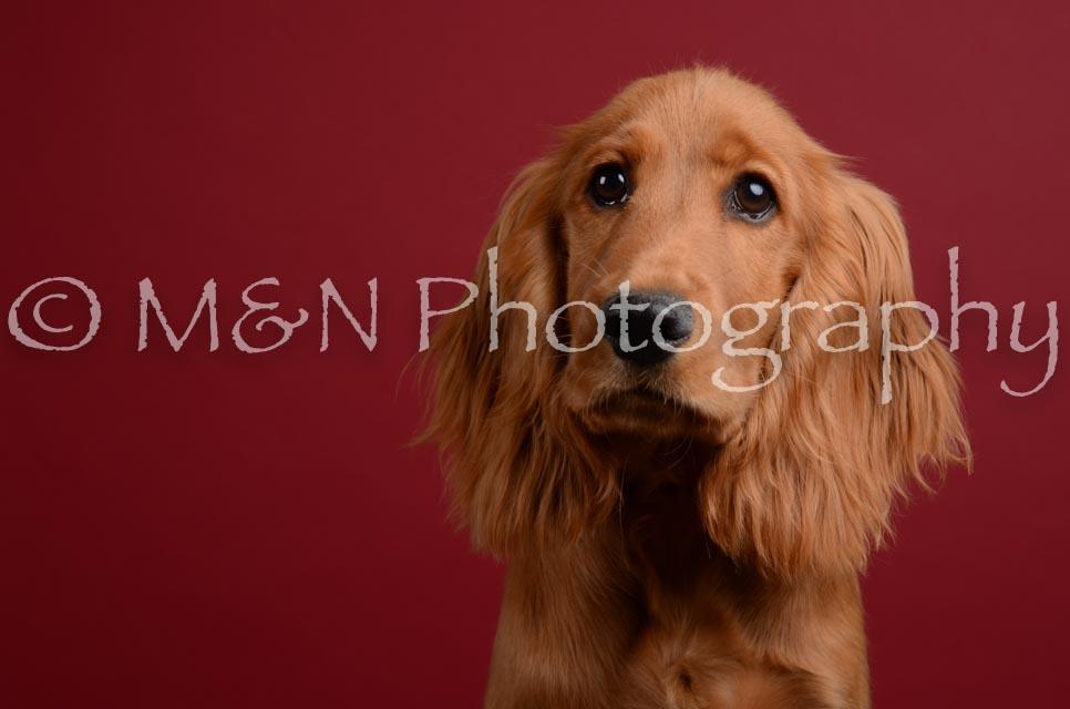 M&N Photography -DSC_3670