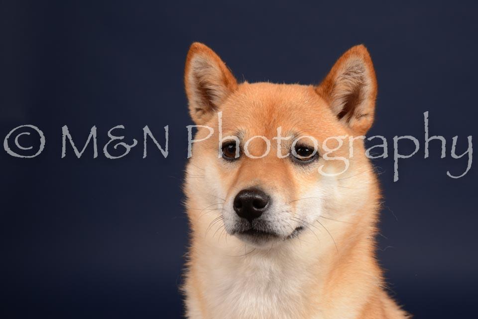 M&N Photography -DSC_0366