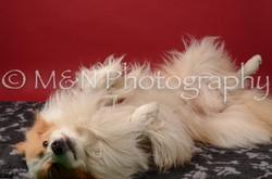 M&N Photography -DSC_6727