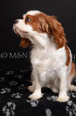 M&N Photography -DSC_5809