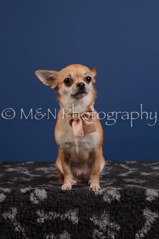 M&N Photography -DSC_5302