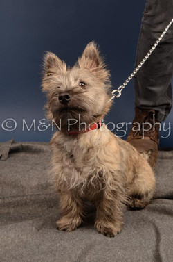 M&N Photography -DSC_4226