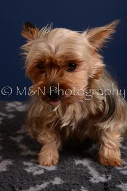 M&N Photography -DSC_4113