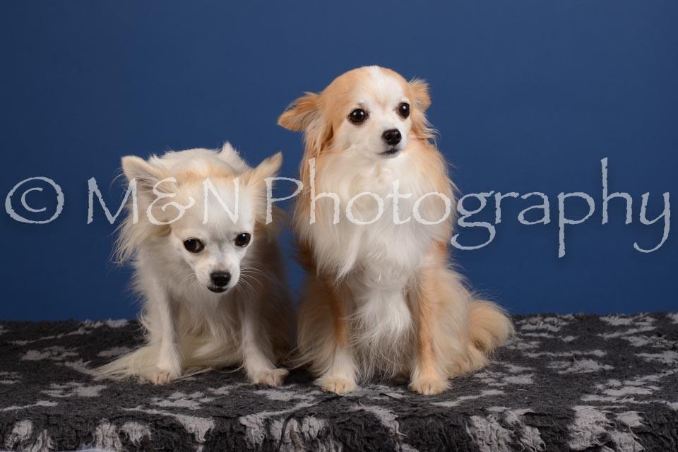 M&N Photography -DSC_5049