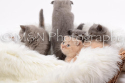 M&N Photography -DSC_8815