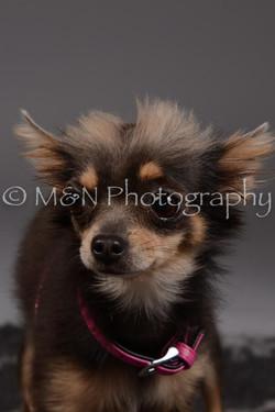 M&N Photography -DSC_2240