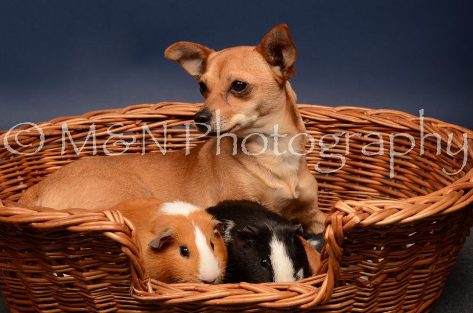 M&N Photography -DSC_4744