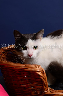 M&N Photography -IMG_4484