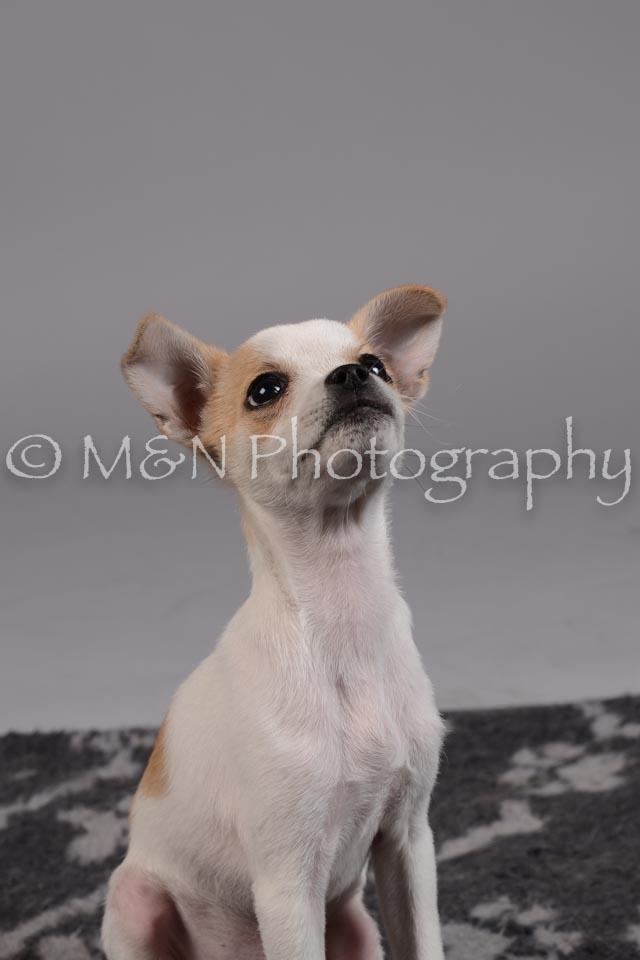 M&N Photography -DSC_2419