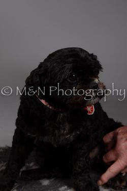 M&N Photography -DSC_2331
