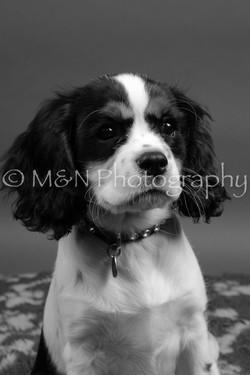 M&N Photography -DSC_8458-2