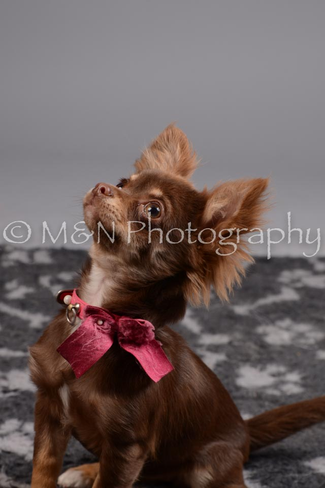 M&N Photography -DSC_2552