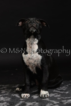 M&N Photography -DSC_2656