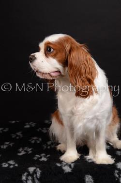 M&N Photography -DSC_5808