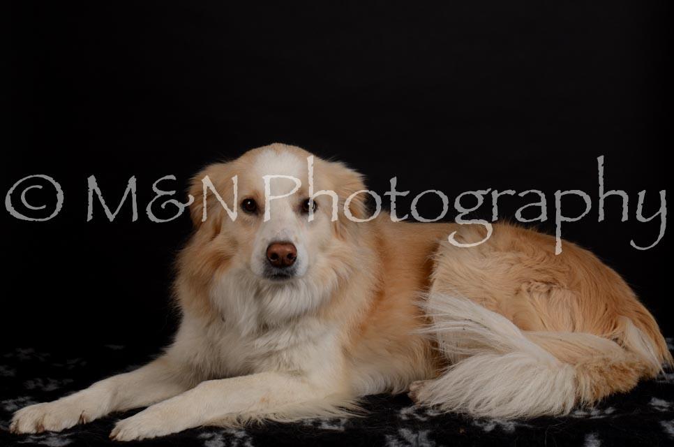 M&N Photography -DSC_5693