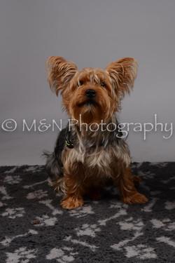 M&N Photography -DSC_2630