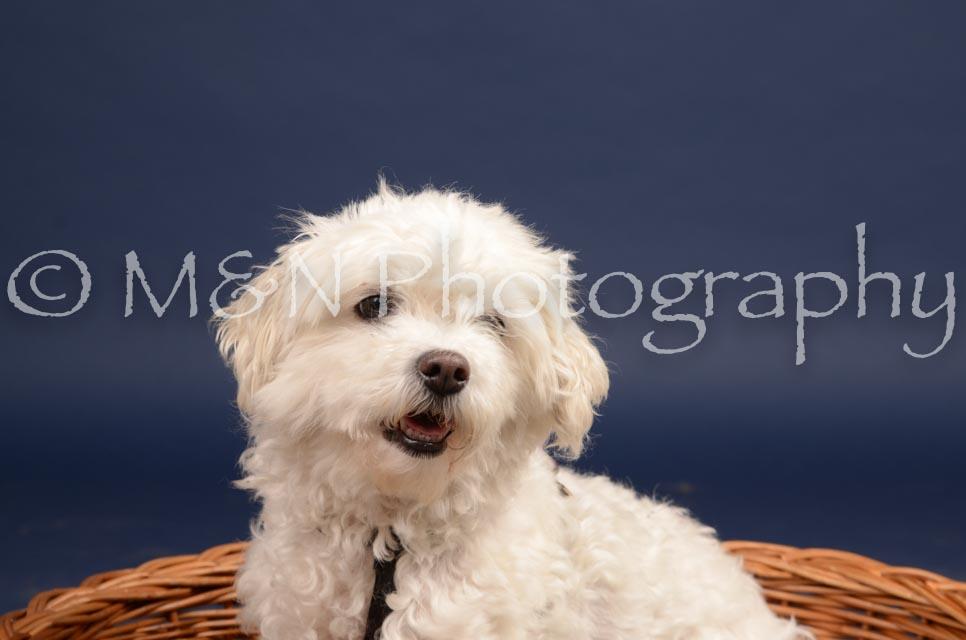 M&N Photography -DSC_0582