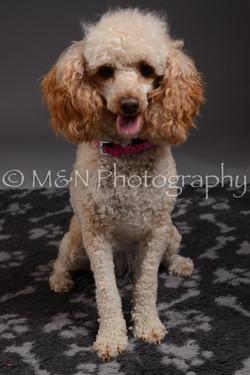 M&N Photography -DSC_2315