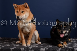 M&N Photography -DSC_4228