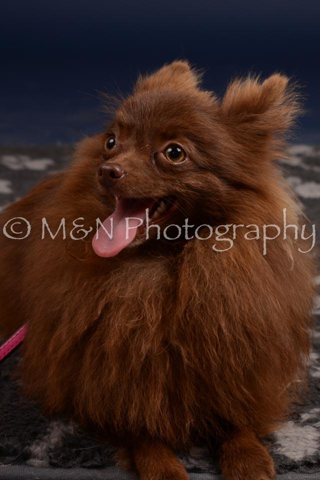 M&N Photography -DSC_0429