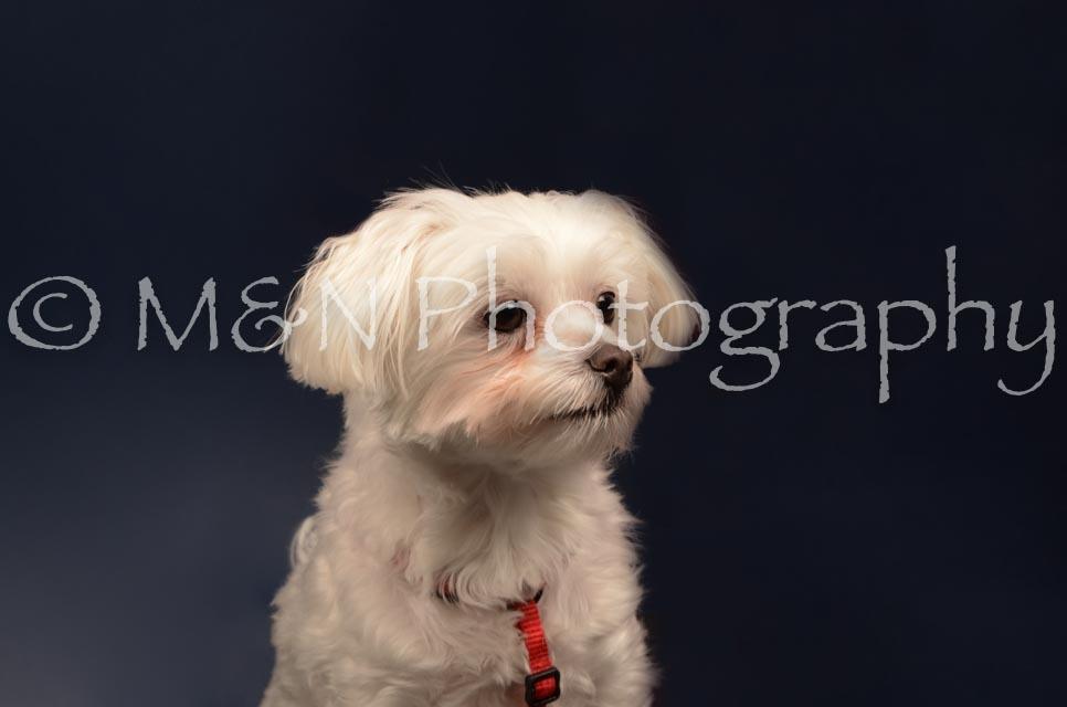 M&N Photography -DSC_4701