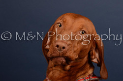 M&N Photography -DSC_4533