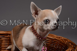 M&N Photography -DSC_2188