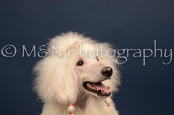 M&N Photography -DSC_3850