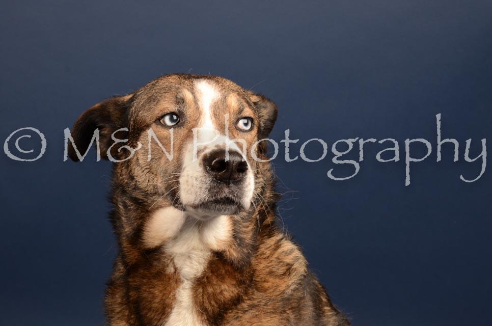 M&N Photography -DSC_4505