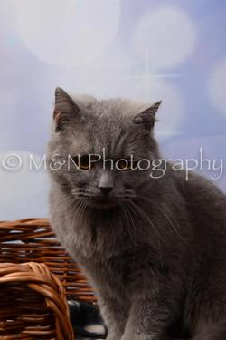 M&N Photography -DSC_6979