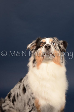 M&N Photography -DSC_4013
