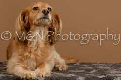 M&N Photography -_SNB0825
